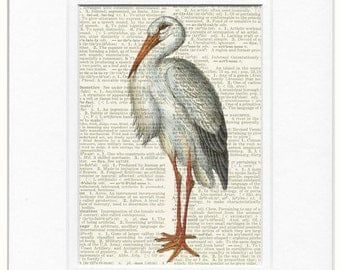 18oo's white stork book page print