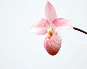 Minimalist Flower Photography Pink Orchid Floral Botanical Print