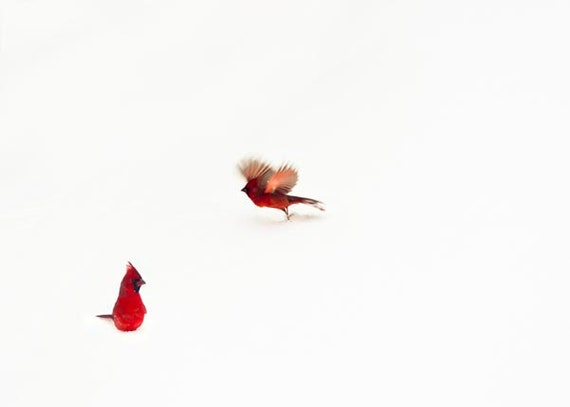 Red Bird Wall Decor : Cardinal photograph white red winter decor snow by