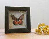 Vintage Orange Butterfly Framed Shadowbox Stacked Cardboard Home Decor