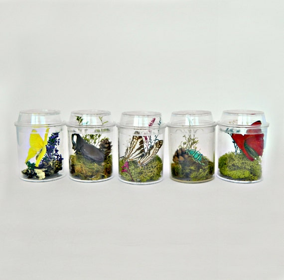 Terrarium kits for children butterfly and insect decor for Bug themed bedroom ideas