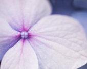 Purple pinwheel, Flower Photography, Nature, Macro, Canvas print, Lavender, Home decor, Minimalist, Feminine, Floral wall art, Bedroom Decor