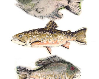 Fish Art - Brooke Trout, Rock Bass, and Whimsical Funky Fish Creation Fine Art Limitrd Edition Print