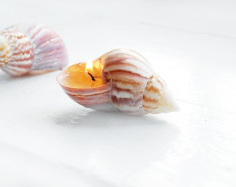 Seashells Candles - Scented Hand Made Candles - Reusable Seashells Eco-friendly Candles Beach Party Decor Wedding Decor, Birthday Gift