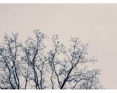 Bird Photography - Nature Photograph - Fine Art Photography - Winter Branches - Birds - Trees - Winter - Pink - Bird Art - Alicia Bock