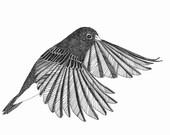 SALE flying bird ORIGINAL artwork ink drawing 6 x 6