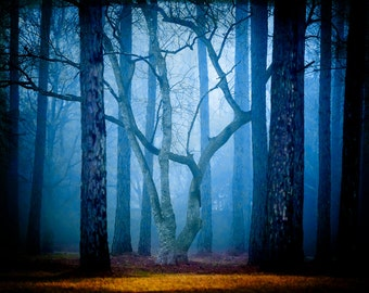 The Court Jester - Fairytale Photography - Enchanted Forest - Foggy Magical Landscapes - Home Decor - Woods, Fog, Trees
