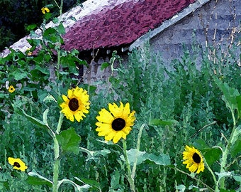 Blue Country Shed Red Roof Yellow Sunflowers Fine Art Photo Archival Photograph Home Decor Gift Under 50