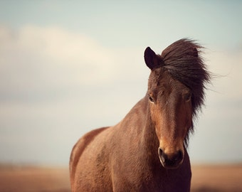 Horse Photography, Nature Photography, Rustic Farmhouse Decor, Large Wall Art Print, Horse Art, Fine Art Photograph - Dalla's Glance