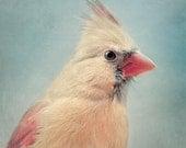 Bird Art Print, Nursery Art, Animal Photography, Nursery Wall Art, Animal Art Print, Nursery Print, Fine Art Photo, Female Cardinal No. 5