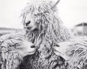 Sheep Art, Animal Photography, Sheep Photograph, Animal Art Print, Black & White Photography Print, Wall Decor