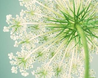 Queen Anne's Lace Art Print, Flower Photography, Sage, Green, Teal, Summer, Flower Wall Art, Fine Art Print