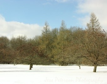 Sunny Winter Photography Snowy Wisconsin Park Print Pine Trees White Snow Blue winter Sky Wall Decor Nature Fine Art Photo 5x7/matted/8x10