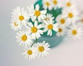White Daisy Print, Still Life Photography,  Flower Photography, Daisy Wall Art, Nursery Art, Turquoise Art