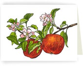 Two Apples on Branch:  Boxed Set of 8 Blank Greeting Cards