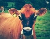 Cow 110 . animal portrait . farmhouse decor . rustic home decor . autumn . summer . green brown rust . photography . farm . fine art print