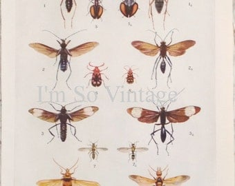 antique signed chromolithograph mimetic beetles 1926