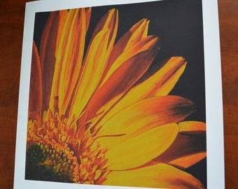 Yellow Gerber Daisy Print