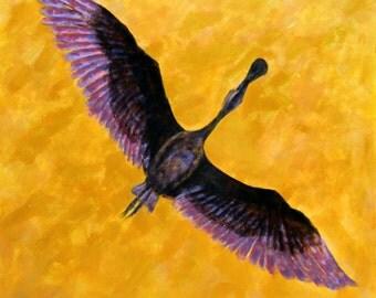 Roseate Spoonbill takeoff