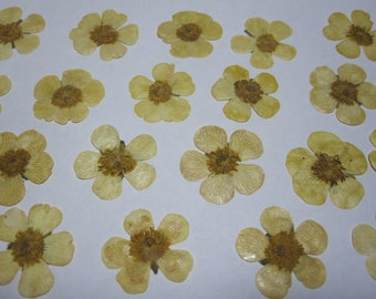 Dried Pressed Flowers for Crafting - Yellow Buttercups