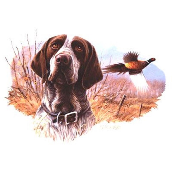 German Shorthair Dog Hunting With A Pheasant One 18 X