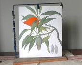 Vintage book plate print of a tropical plant with an orange fruit book plate