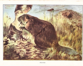 1926 Animal Print - Beaver - Vintage Antique Natural History Home Decor Art Illustration for Framing