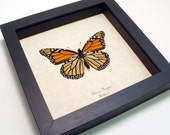 Framed Butterfly The Real Monarch Verso Conservation Display 111v