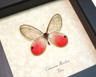 Father's Day Gift Butterfly Pink Neon Glasswing Display 227