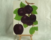 1890 Very Rare Antique Chromolithograph of Plums  on Panel. 1890 Print. Ready to Display