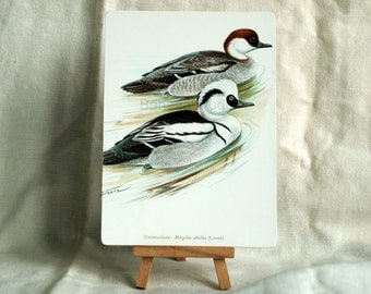 Vintage Print of Ducks on Panel - 1962 Bird Print - Ready to Display