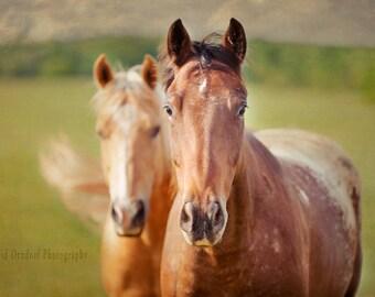 Equine Fine Art, Horse Photo, Horse Portrait, Horse Decor, Horse Photography, 8x12 Fine Art Print,