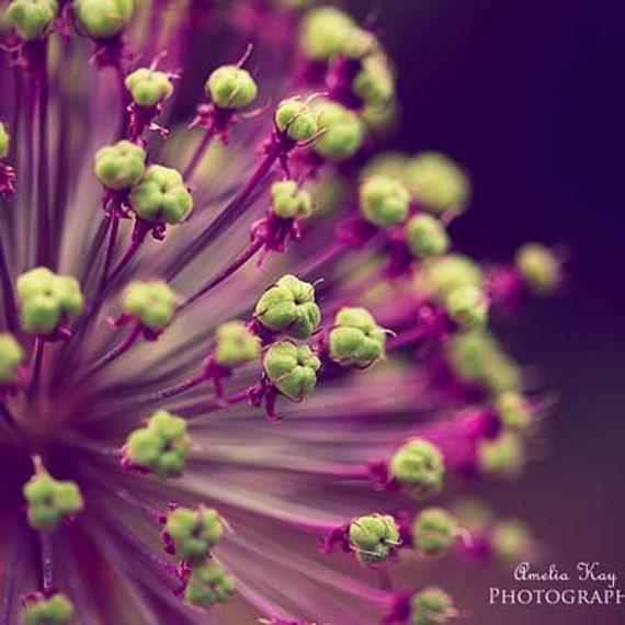 OVERSTOCK SALE, Nature Flower Photography - Purple and Lime Green - dark purple, plum decor, plant photo, lavender violet garden, lime art