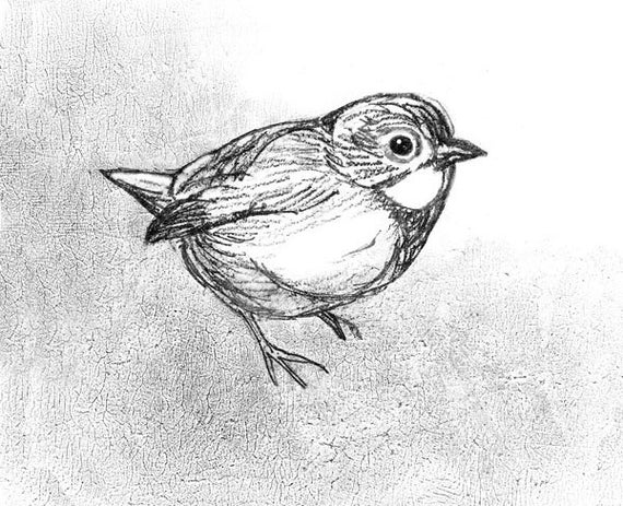 Vireo Bird Pencil Sketch Song Bird Small by MarshNelsonFineArt