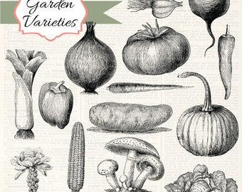 Garden Variety Vintage Vegetable clipart, digital clip art and photoshop brushes: Commercial and Personal Use