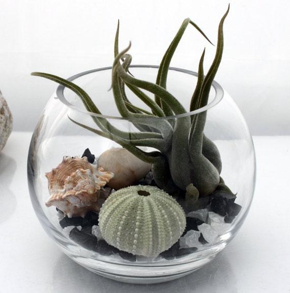 Zen garden terrarium kit small desktop fish bowl live for Small glass fish bowls