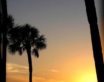 Sunset Palm Trees fine art photography print