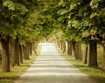 Tuscany Photograph Italy Photo Italian Landscape Countryside Road Trees Pastel Tones ita87