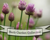 Six Packs Organic Seeds Herb Garden Kit