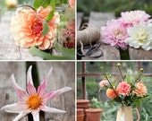Dahlia Collection - set of 4 notecards