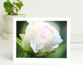 Photo Note Card Pale Pink Flower, 'Morden Blush' Rose, dreamy pastel floral photography blank notecard stationery