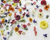 Wedding Decorations, Dried Flowers, Flower Confetti, Petals Confetti - LarkspurHill