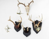 Set of 3 Brass Himmeli Air Plant Holders / Hanging Mobile / Geometric Ornament - HRUSKAA