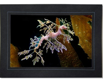 Leafy Sea Dragon Photo Greeting Card - Hippocampus - Underwater Photography - Water Dragon Art - Beach Decor