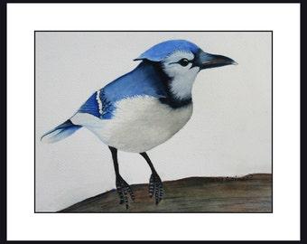 """Sweet Blue Jay Watercolor Print 10"""" x 8"""" unframed"""
