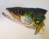 Colored Pencil Walleye Limited Edition Print
