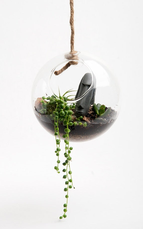 Hanging Round Terrarium Kit Desktop Micro-Environment - Everything you need for an Indoor Garden - Seeds, Instructions, Soil included
