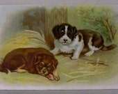 Puppies Dogs Early Trade Card Advertising Card