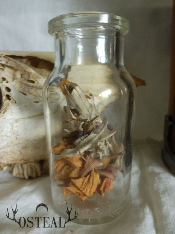 Muroidea Curiosity Collection -Rat skull, vintage bone, crystals and more
