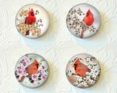 Magnet Red Cardinal Set of 4 Magnets 1.5 inch each Buy 3 Get 1 Free  320M